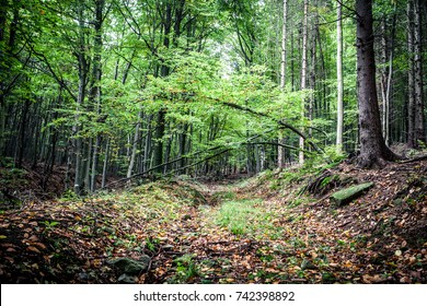 Path in the leafy forest.  Path covered with leaves in a deep forest.