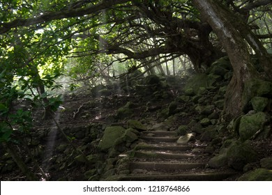 The path to the leprosy colony found on Molokai, Hawaii - Light beams shoot through the leaves of the trees.