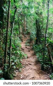 Path in lush tropical rainforest, Rio de Janeiro, Brazil
