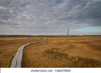 A path made of duckboards leading hikers across the aapa bog / mire in Lapland, Finland. Future is uncertain and often not straightforward. Walking alone. Unbeaten path.