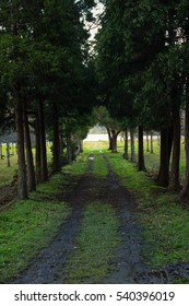 Path in the middle of a forest. Azores Islands Portugal