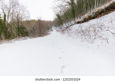 A path in the middle of woods covered by snow, with footsteps in the foreground