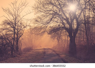 Path in a misty forest at sunrise