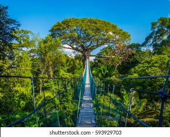 The path to mother earth, on a high suspended bridge in an Amazonian Canopy, Peru