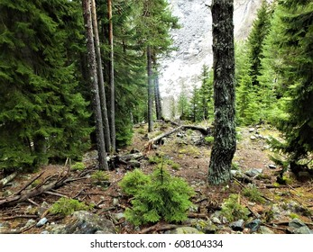 Path in a mountain forest.