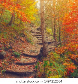 Path in natural park with autumn trees. Sunny autumn picturesque forest landscape with sunlight. Fall trees with colorful leaves background. Vivid october day, maple autumn trees road fall way
