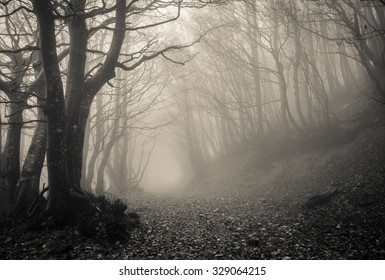 Path on gothic forest of Monte Catria, Marche - Italy.