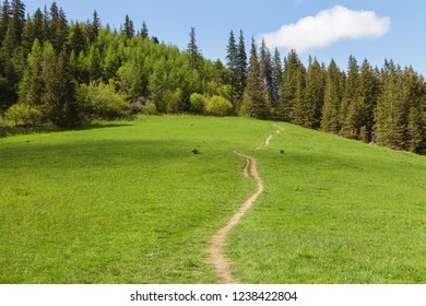 Path on the green meadow leading to the pine forest