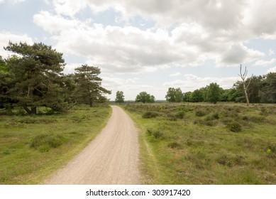 Path on the heather Hilversum-Laren, Netherlands