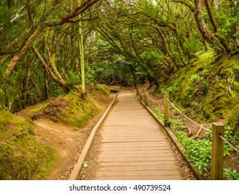 Path on trail Sendero de Sentidos in Anaga mountains, Tenerife, Canary Islands, Spain