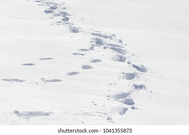 The path on the tundra in the snow