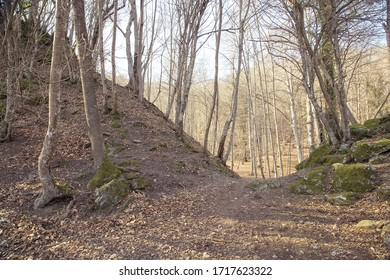 path to opening between hills in forest