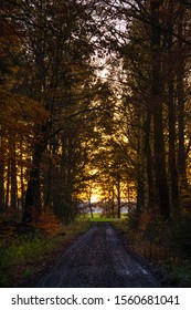 path out of autumn forest in sunset light. tall trees standing next to footpath in fall woodland