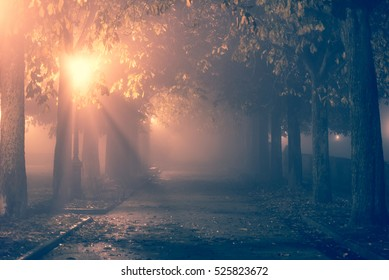 Path in a park during a foggy night