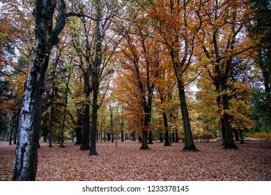 path in the park, golden tree, autumn theme