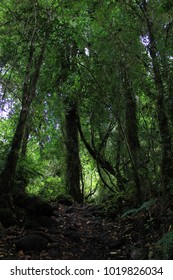 Path in patagonian rainforest