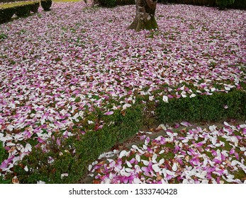 Path of petals, the spring is here.