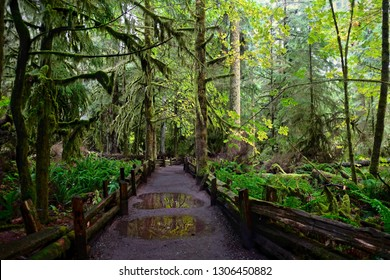 Path in the rain forest in Cathedral Grove on a rainy day. Mac Millan Provincial Park on Vancouver Island. Nanaimo. British Columbia. Canada.