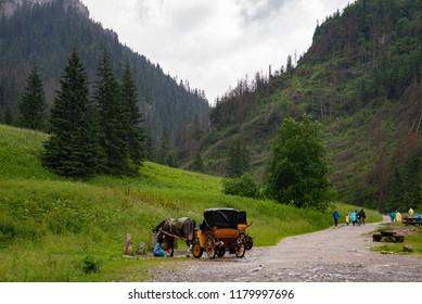 path in the rain in the valley of Koscieliska, Tatra Mountains, Poland