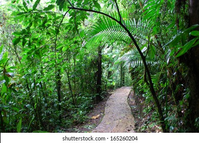 Path in rainforest, Monteverde National Park, Costa Rica