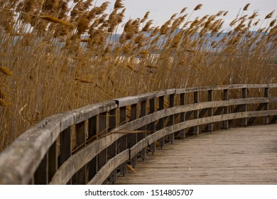 Path and reeds next to water