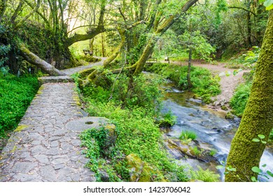 Path and river on the green riverbank forest of Armenteira river on the stone and water route in Meis town, Galicia