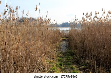 The path to the riverbank leads between dense reed grasses. This view can be seen by the Narew River in Poland.