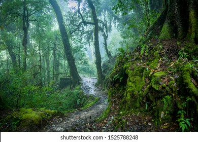 A path runs through a misty Himalayan forest of north Sikkim