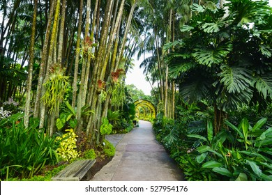 A path shrouded by nature in the Singapore National Orchid Garden