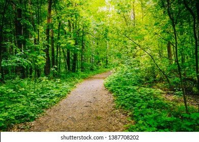 Path in the summer forest with green grass and trees