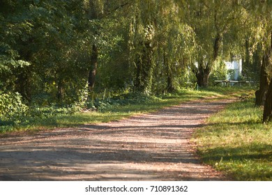 A path in a sunny September day in the park