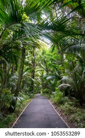 A path throough Nikau Palm Trees, a native New Zealand plant in Morere close to Gisborne.
