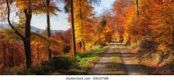 Path through the autumn forest in the Black Forest.