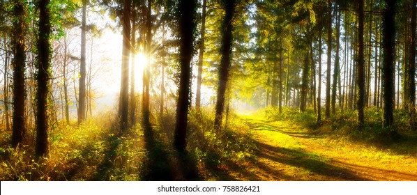Path through an autumn forest in bright sunshine