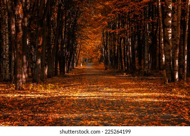 the path through the autumn forest, littered with leaves