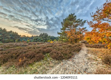 Path through Autumn heathland landscape with colorful leaves on trees in Drenthe, Netherlands