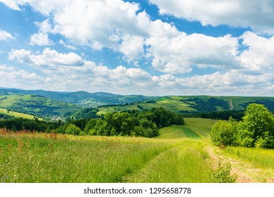 path through beautiful summer countryside. grassy meadow among the forest. trees along the road. wonderful nature scenery of Carpathian