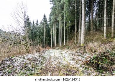 Path through Black Forest in winter