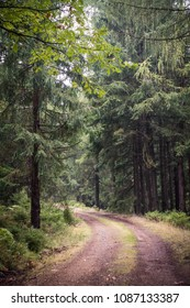 A path through czech woods Brdy surrounded by coniferous trees.