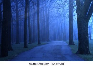 A path through a dark foggy blue forest