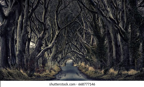 Path through the dark hedges.
