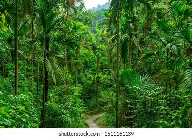Path through dense jungle in Meghalaya, India