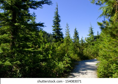 Path through Douglas Fir forest. North Vancouver, British Columbia, Canada