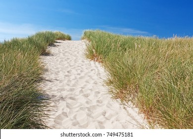 Path through dunes to the beach at the north sea near Kampen on Sylt, Schleswig-Holstein, Germany