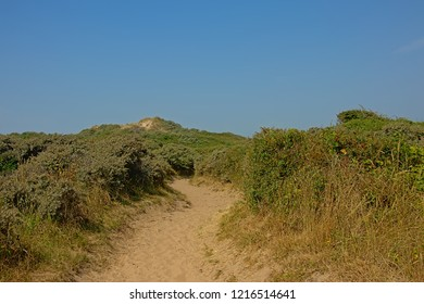 Path through dunes with shrubs on the side green vegetation on the North sea Opal coast, with the city of Wimereux in the distance, under a clear blue sky, Nord Pas De calais, France
