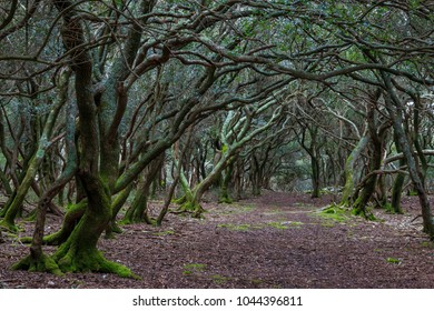 Path through enchanted forest on the Veliki Brijun Island in the Croatian Brijuni national park
