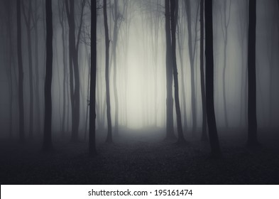 Ghost Forest Images, Stock Photos & Vectors | Shutterstock