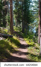 Path through an evergreen forest in the mountains of western Colorado