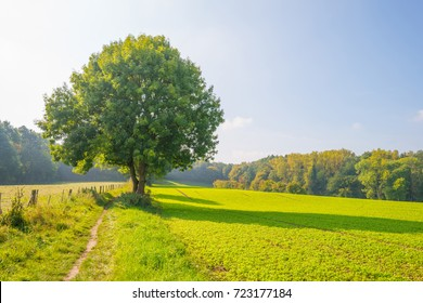 Path through a field in sunlight in autumn