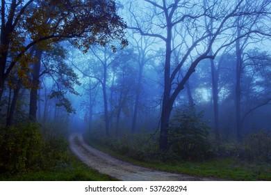 Path through Foggy Woods